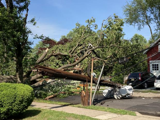 Tree blown over from June 3rd derecho