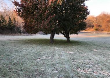 Frost photo
