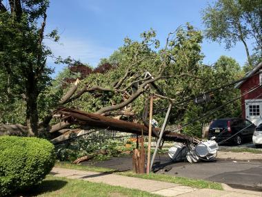 Tree blown over from June 3rd derecho