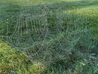 Dew spider web on the morning of October 14th in Sussex County